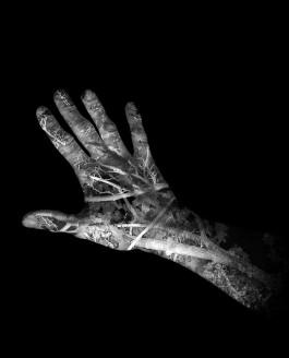 Hände (Hands) 2013